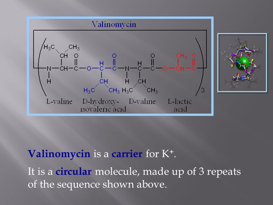 Basic structure of the potassium channel.Doyle et al.