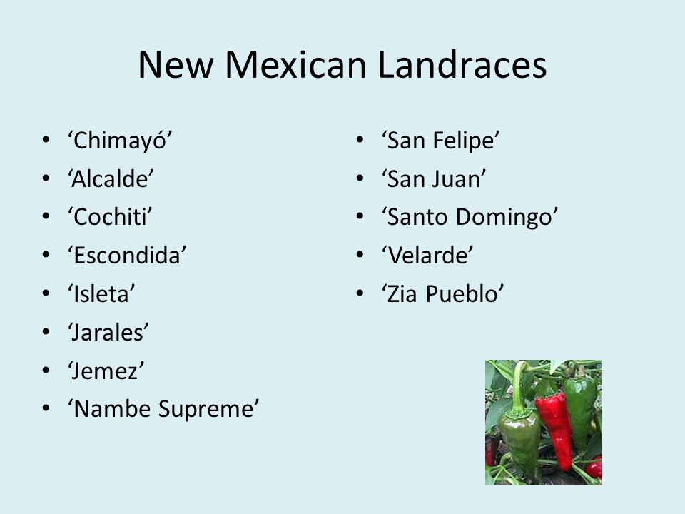 New Mexican Landraces Chimayó Alcalde Cochiti Escondida Isleta Jarales Jemez Nambe Supreme San Felipe San Juan Santo Domingo Velarde Zia Pueblo