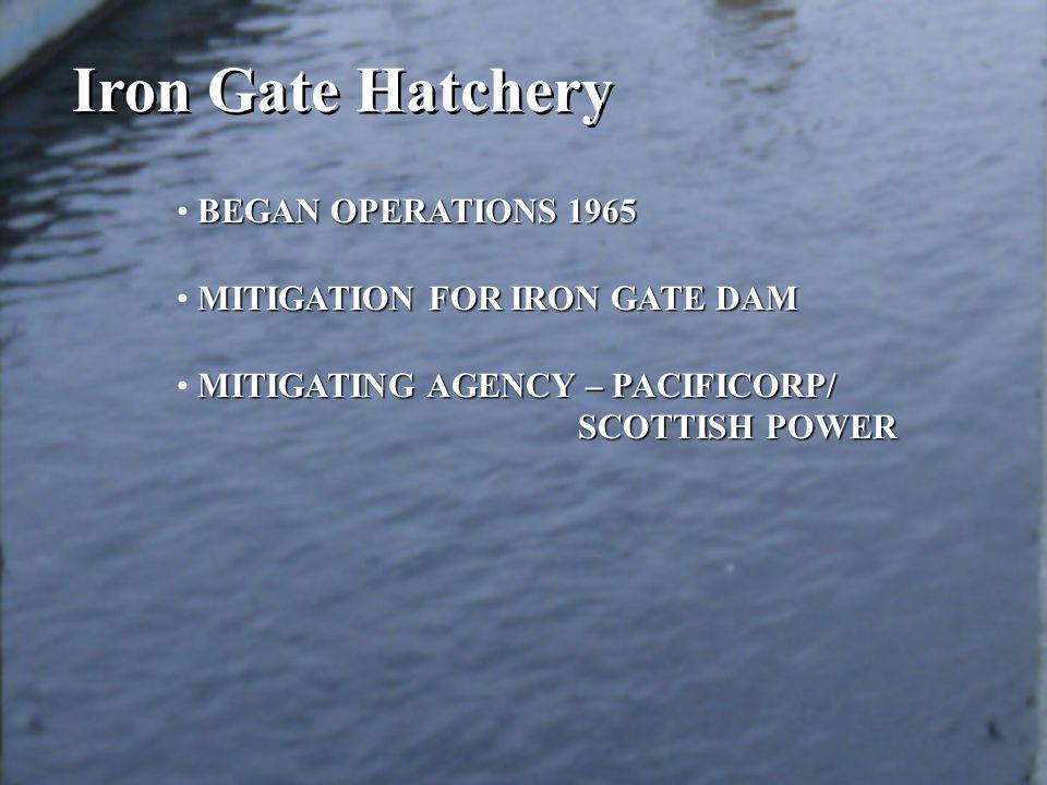 BEGAN OPERATIONS 1965 MITIGATION FOR IRON GATE DAM MITIGATING AGENCY – PACIFICORP/ SCOTTISH POWER SCOTTISH POWER Iron Gate Hatchery