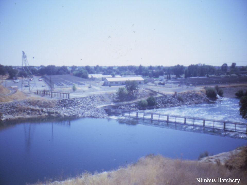 Nimbus Hatchery