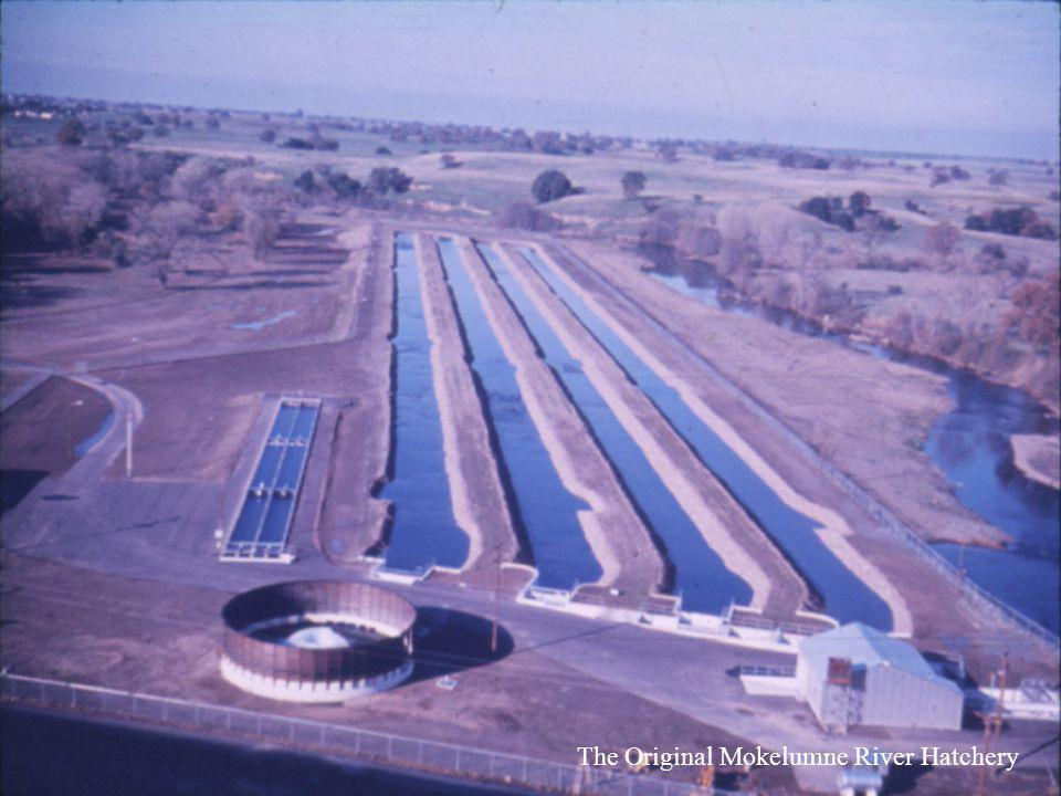 The Original Mokelumne River Hatchery