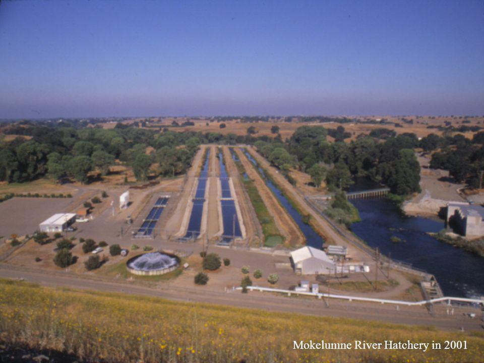 Mokelumne River Hatchery in 2001