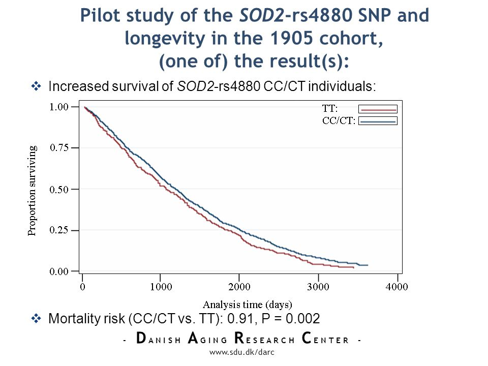 - D A N I S H A G I N G R E S E A R C H C E N T E R - www.sdu.dk/darc Pilot study of the SOD2-rs4880 SNP and longevity in the 1905 cohort, (one of) the result(s): Increased survival of SOD2-rs4880 CC/CT individuals: Mortality risk (CC/CT vs.