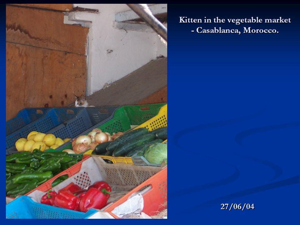 Kitten in the vegetable market - Casablanca, Morocco. 27/06/04