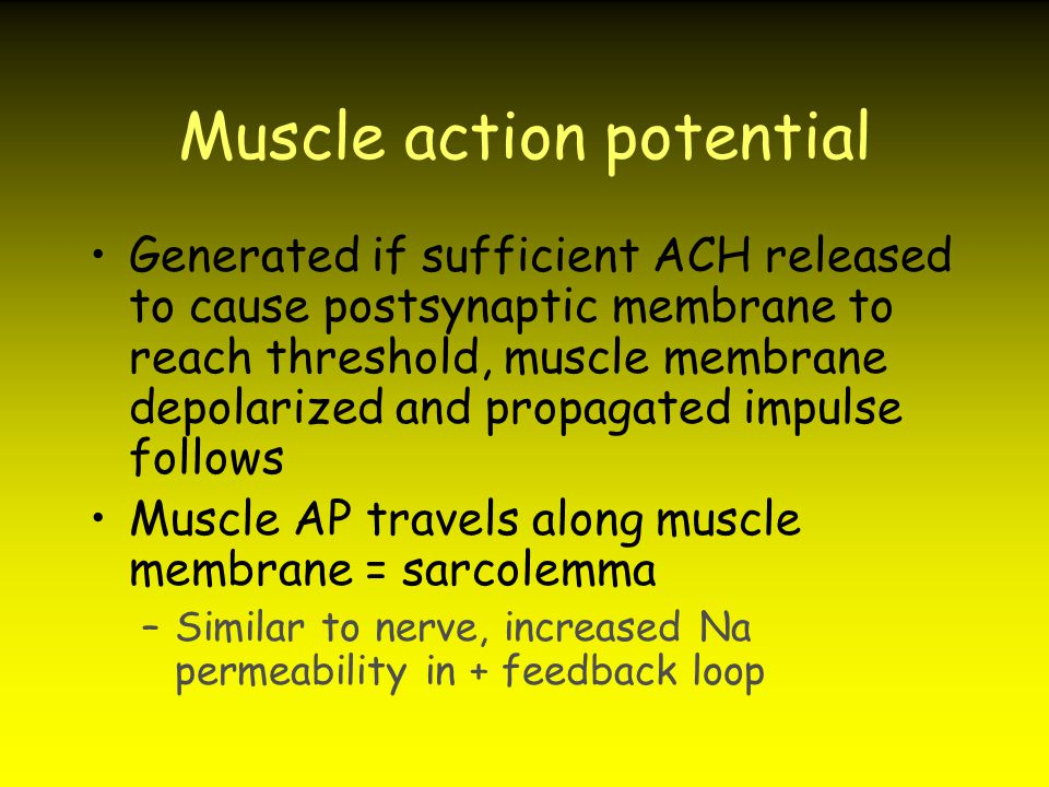 Muscle action potential Generated if sufficient ACH released to cause postsynaptic membrane to reach threshold, muscle membrane depolarized and propag