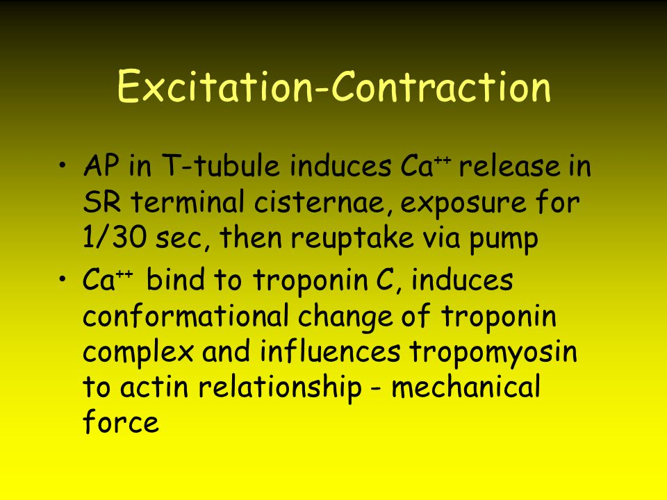 Excitation-Contraction AP in T-tubule induces Ca ++ release in SR terminal cisternae, exposure for 1/30 sec, then reuptake via pump Ca ++ bind to trop