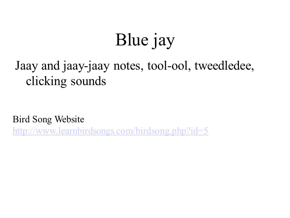 Blue jay Jaay and jaay-jaay notes, tool-ool, tweedledee, clicking sounds Bird Song Website http://www.learnbirdsongs.com/birdsong.php?id=5