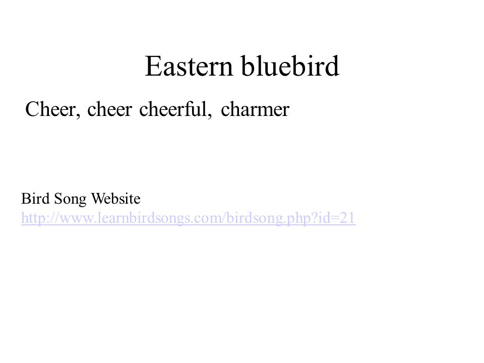 Eastern bluebird Cheer, cheer cheerful, charmer Bird Song Website http://www.learnbirdsongs.com/birdsong.php?id=21