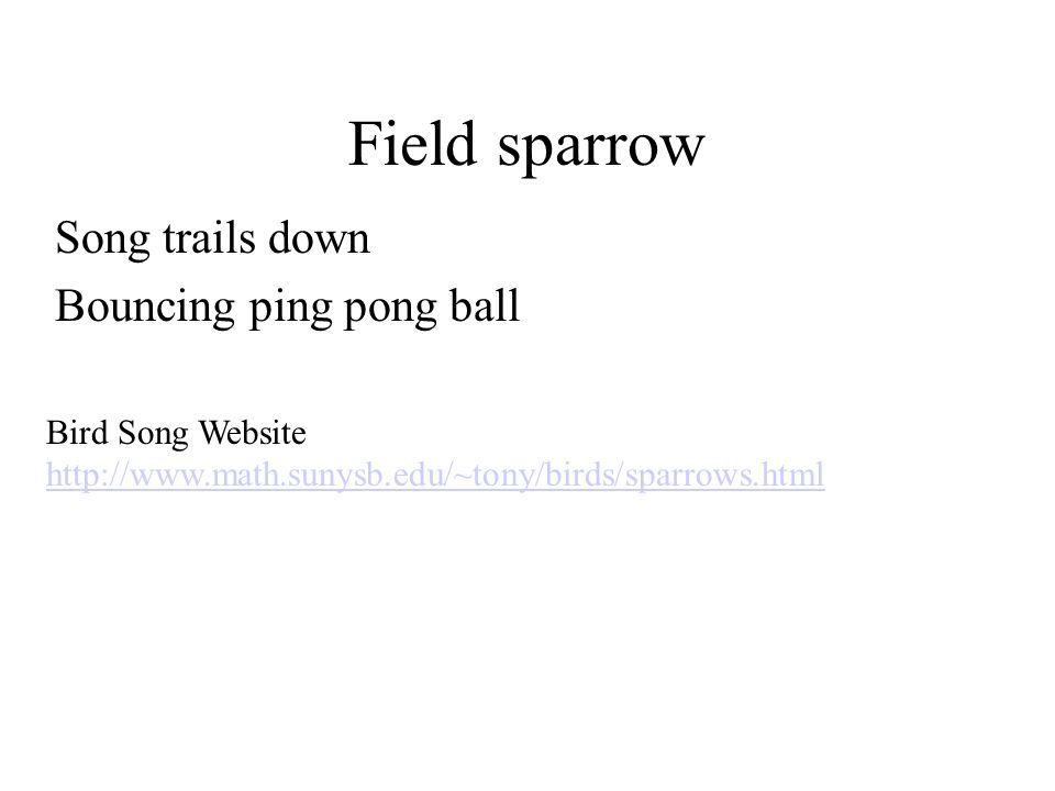 Field sparrow Song trails down Bouncing ping pong ball Bird Song Website http://www.math.sunysb.edu/~tony/birds/sparrows.html