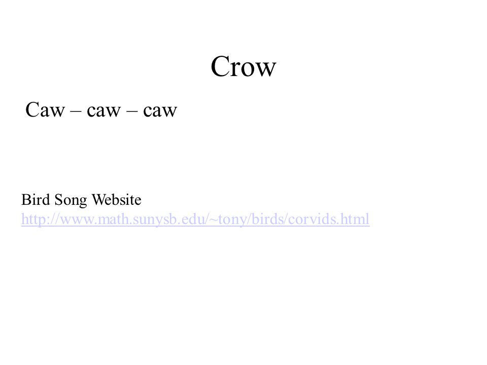 Crow Caw – caw – caw Bird Song Website http://www.math.sunysb.edu/~tony/birds/corvids.html
