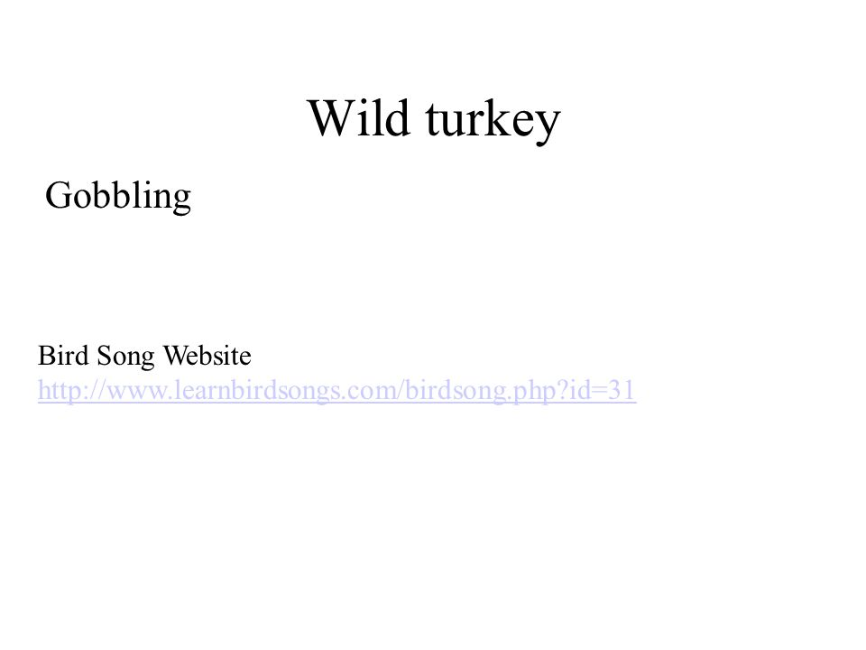 Wild turkey Gobbling Bird Song Website http://www.learnbirdsongs.com/birdsong.php?id=31