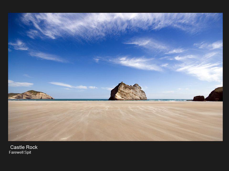 Love Australiasian Gannet Kidnappers Cape