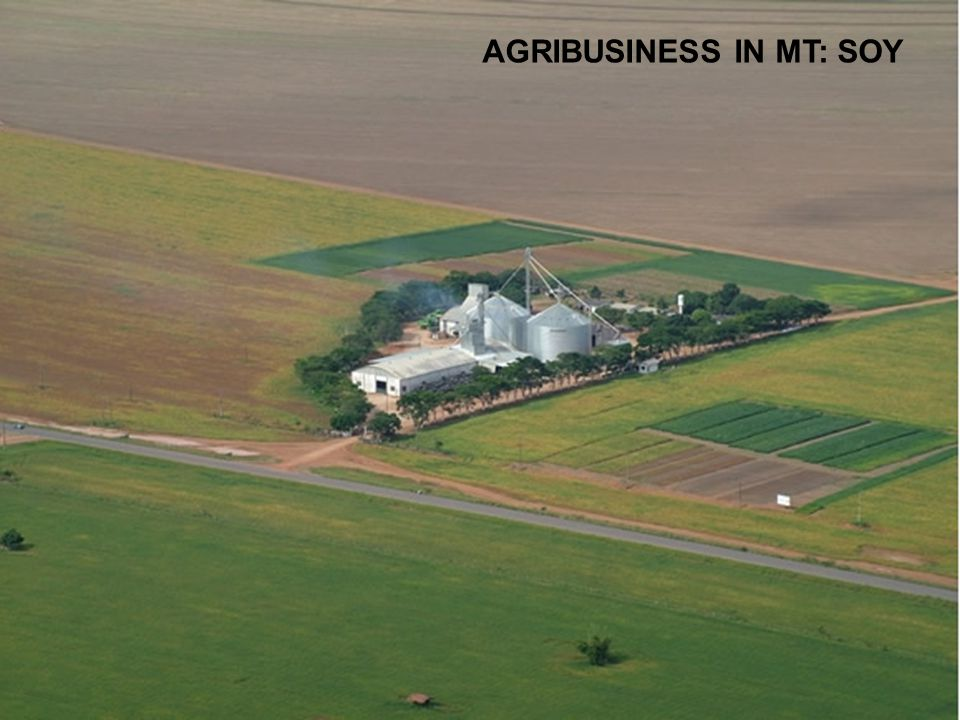 37/59 AGRIBUSINESS IN MT: SOY