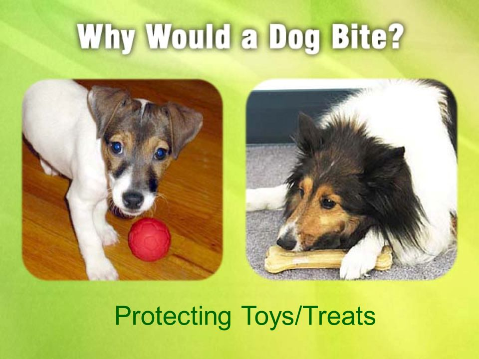 Protecting Toys/Treats