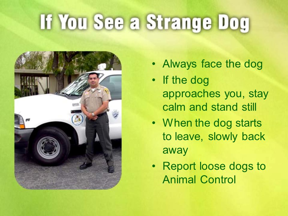 Always face the dog If the dog approaches you, stay calm and stand still When the dog starts to leave, slowly back away Report loose dogs to Animal Control