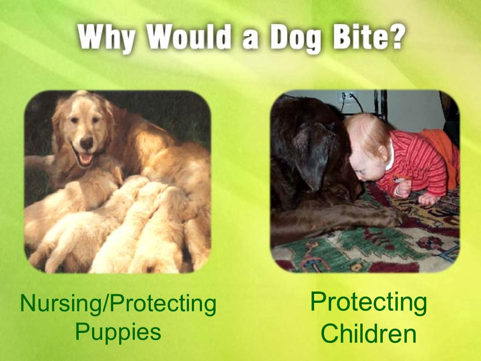 Nursing/Protecting Puppies Protecting Children