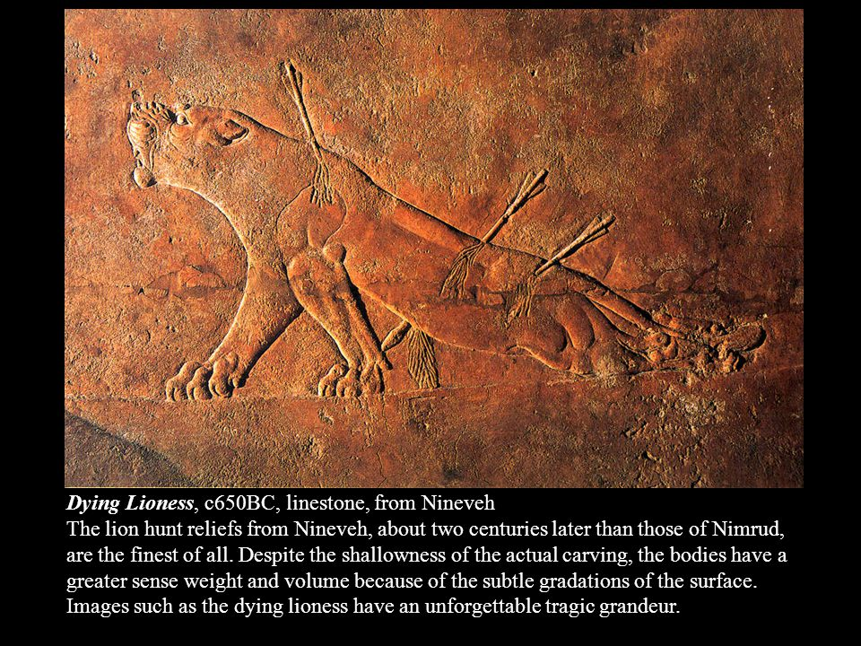 Dying Lioness, c650BC, linestone, from Nineveh The lion hunt reliefs from Nineveh, about two centuries later than those of Nimrud, are the finest of all.