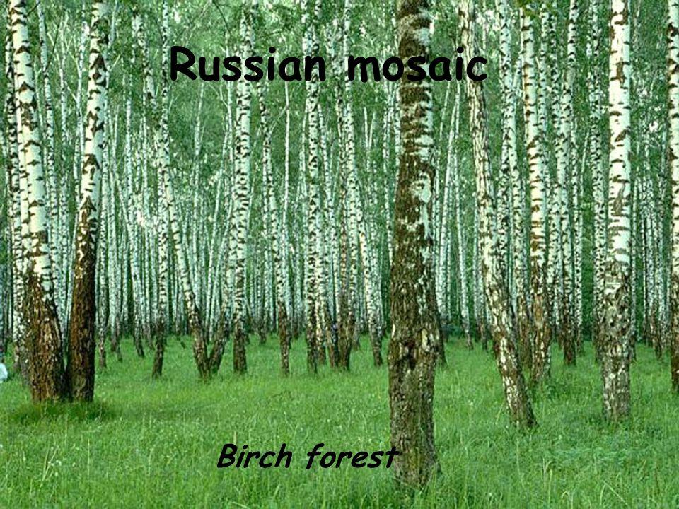 Russian mosaic Birch forest