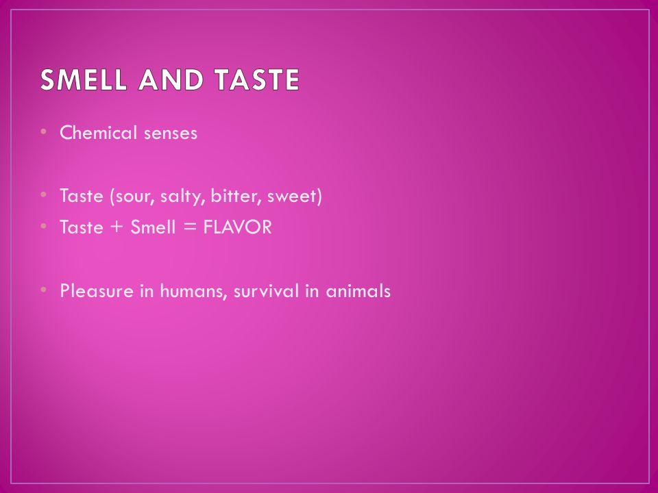Chemical senses Taste (sour, salty, bitter, sweet) Taste + Smell = FLAVOR Pleasure in humans, survival in animals
