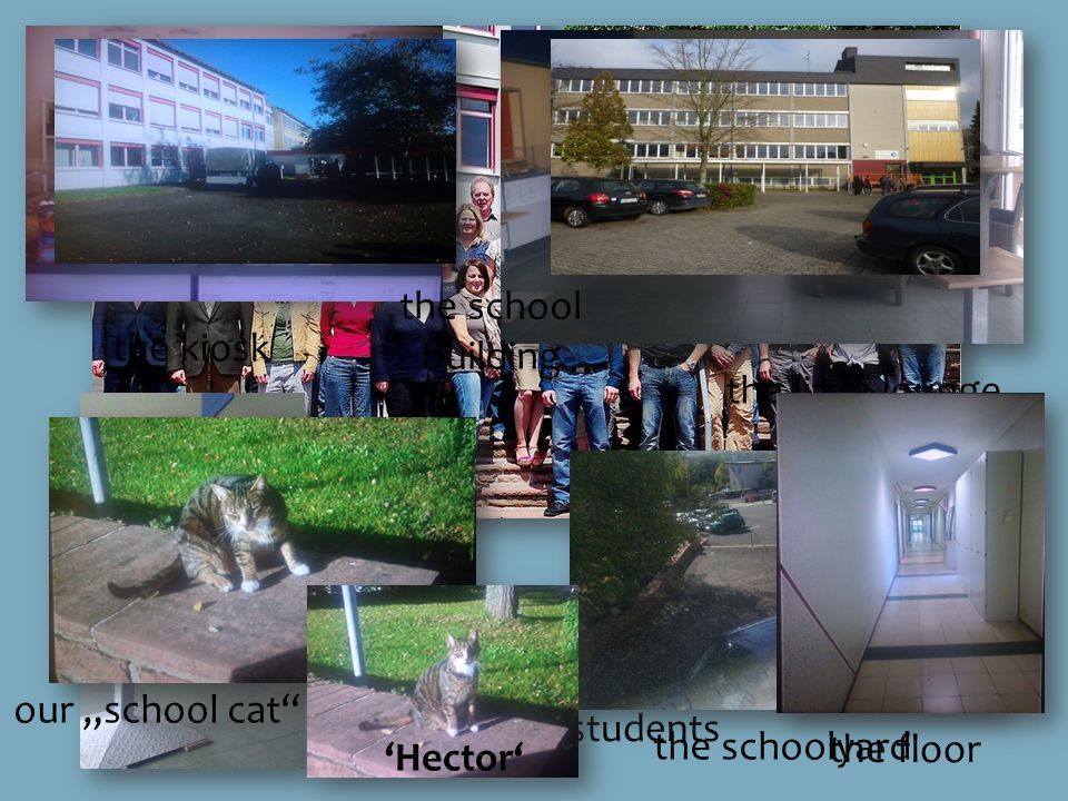 62 teachers and about 970 students our break hall the little lounge the kiosk the schoolyard our school cat Hector the floor the school building