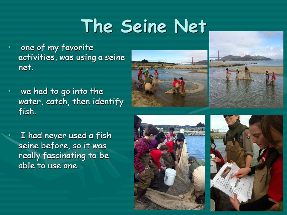 The Seine Net one of my favorite activities, was using a seine net. one of my favorite activities, was using a seine net. we had to go into the water,