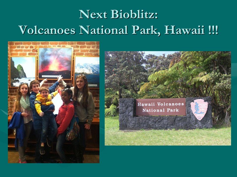 Next Bioblitz: Volcanoes National Park, Hawaii !!!