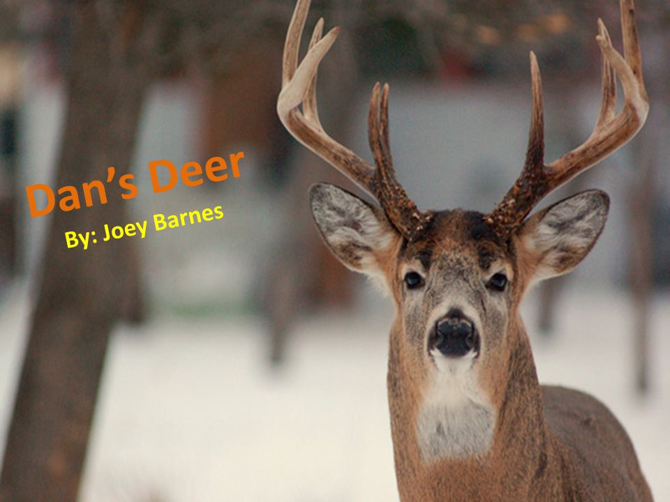 Dans Deer By: Joey Barnes