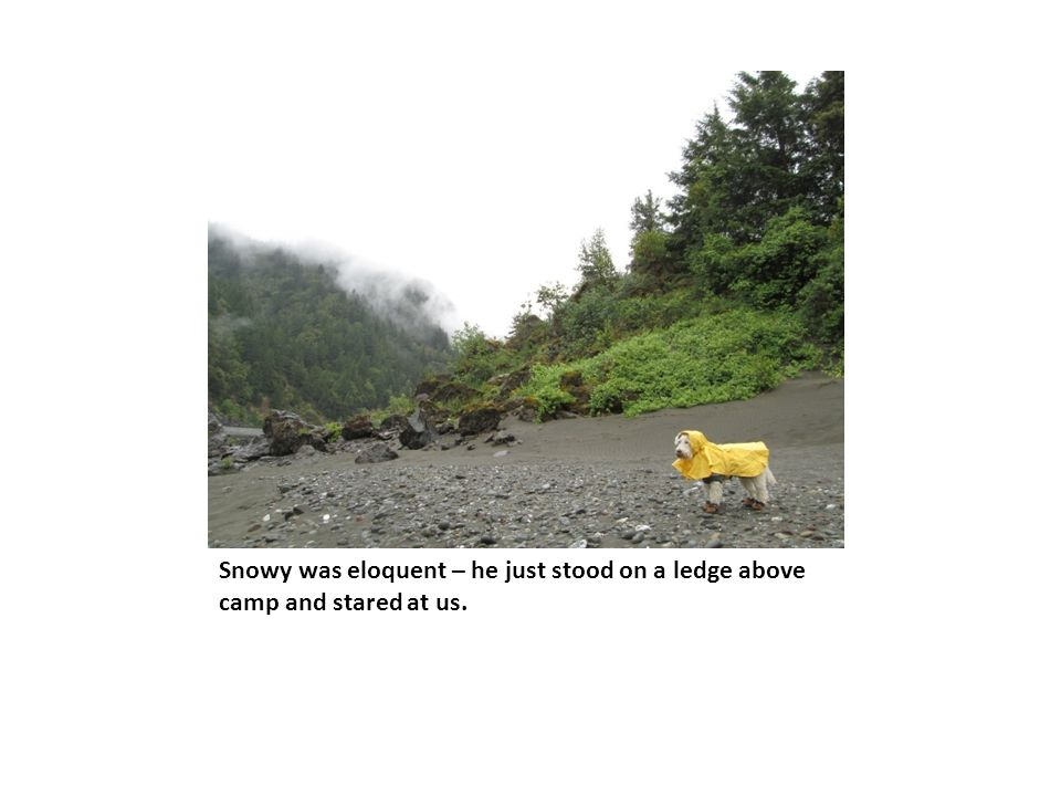 Snowy was eloquent – he just stood on a ledge above camp and stared at us.