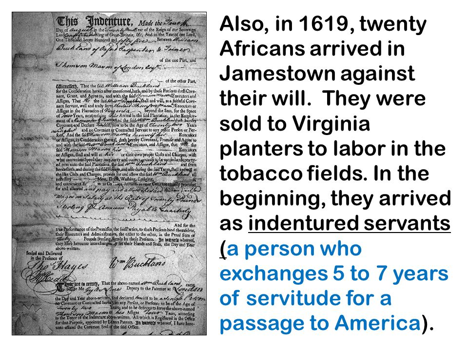 Also, in 1619, twenty Africans arrived in Jamestown against their will. They were sold to Virginia planters to labor in the tobacco fields. In the beg