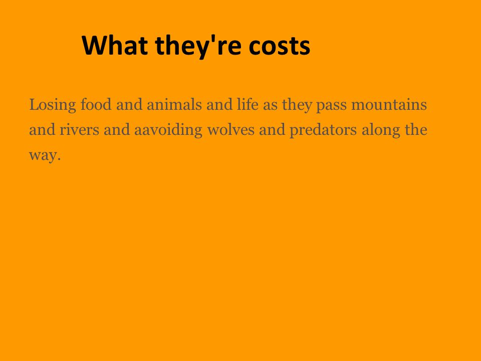 What they re costs Losing food and animals and life as they pass mountains and rivers and aavoiding wolves and predators along the way.