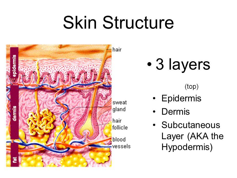Skin Structure 3 layers (top) Epidermis Dermis Subcutaneous Layer (AKA the Hypodermis)
