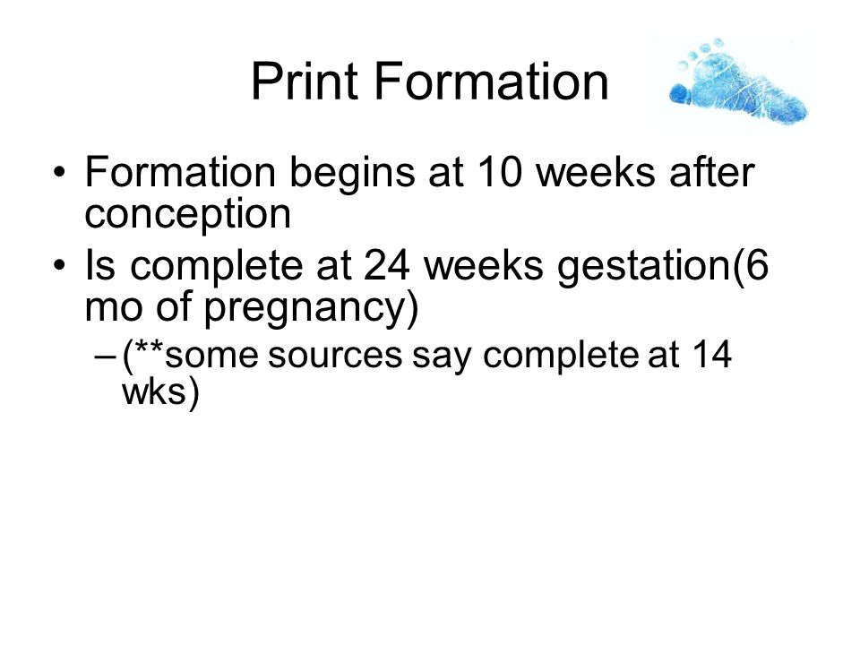 Print Formation Formation begins at 10 weeks after conception Is complete at 24 weeks gestation(6 mo of pregnancy) –(**some sources say complete at 14 wks)