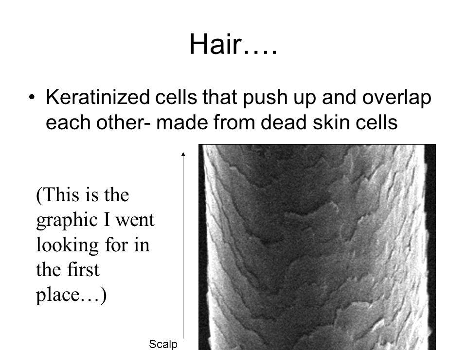 Hair….