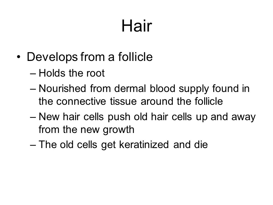 Hair Develops from a follicle –Holds the root –Nourished from dermal blood supply found in the connective tissue around the follicle –New hair cells push old hair cells up and away from the new growth –The old cells get keratinized and die