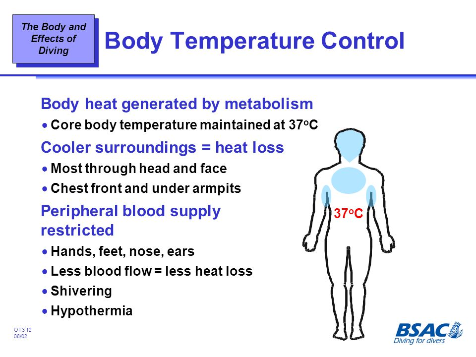 The Body and Effects of Diving OT3 12 08/02 Body Temperature Control Body heat generated by metabolism !Core body temperature maintained at 37 o C Coo