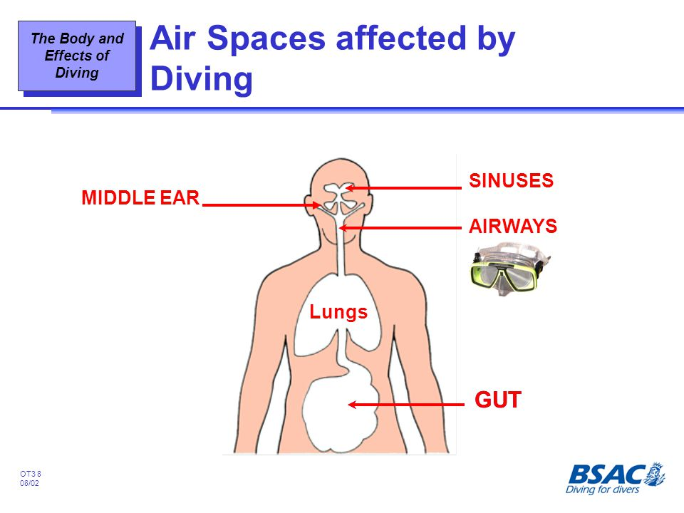 The Body and Effects of Diving OT3 8 08/02 Air Spaces affected by Diving SINUSES Lungs AIRWAYS MIDDLE EAR GUT