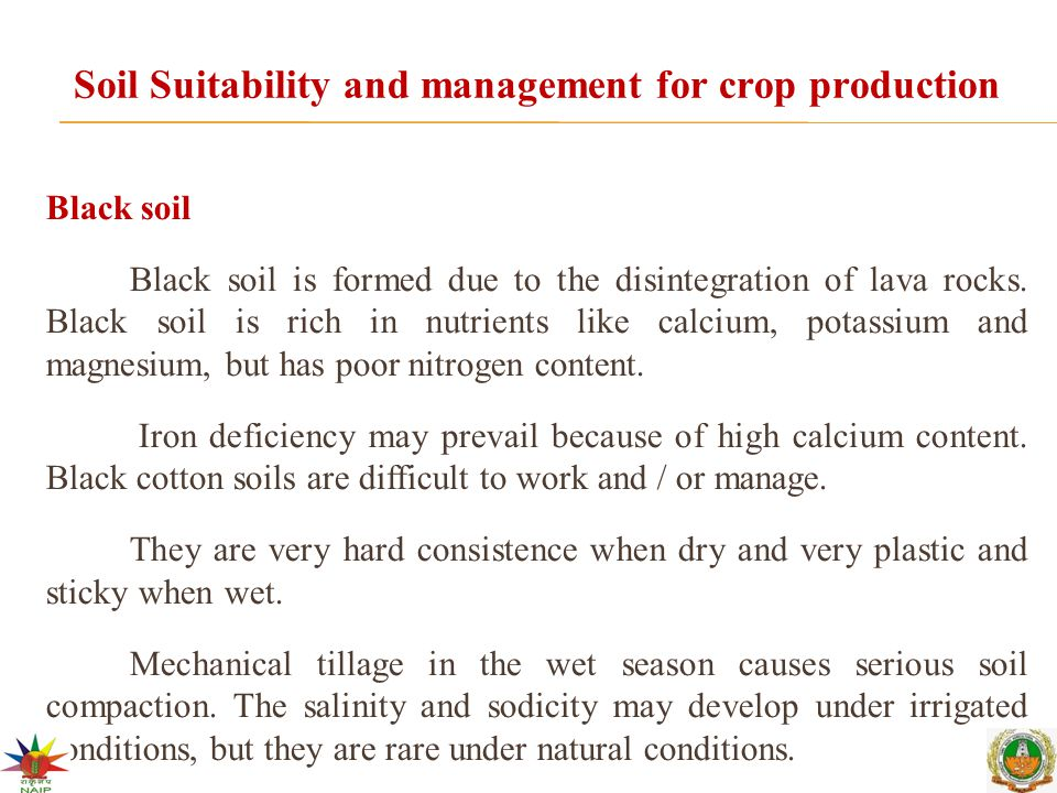 Soil Suitability and management for crop production Black soil Black soil is formed due to the disintegration of lava rocks.