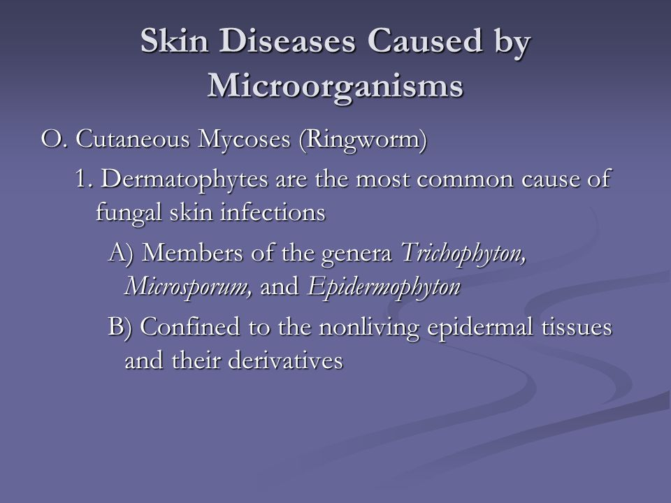 Skin Diseases Caused by Microorganisms O. Cutaneous Mycoses (Ringworm) 1. Dermatophytes are the most common cause of fungal skin infections A) Members