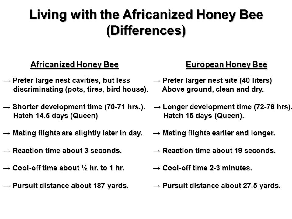 Africanized Honey Bee European Honey Bee Africanized Honey Bee European Honey Bee Prefer large nest cavities, but less Prefer larger nest site (40 liters) Prefer large nest cavities, but less Prefer larger nest site (40 liters) discriminating (pots, tires, bird house).