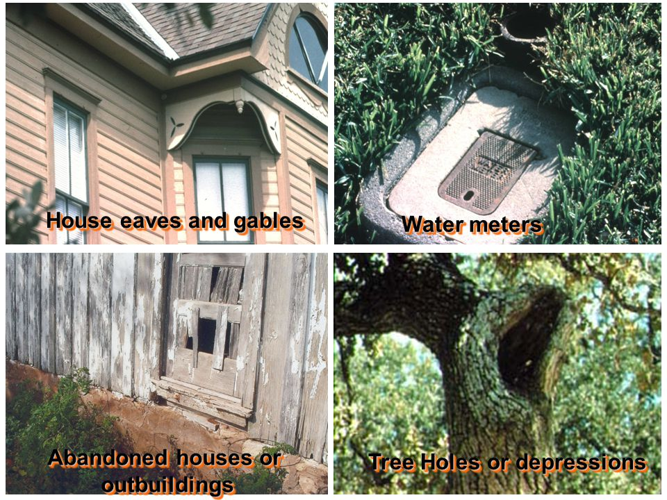 House eaves and gables Water meters Abandoned houses or outbuildings outbuildings Tree Holes or depressions