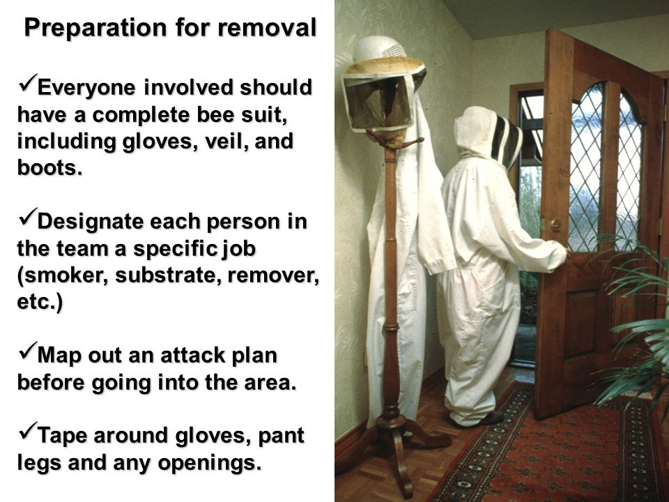 Preparation for removal Everyone involved should have a complete bee suit, including gloves, veil, and boots.