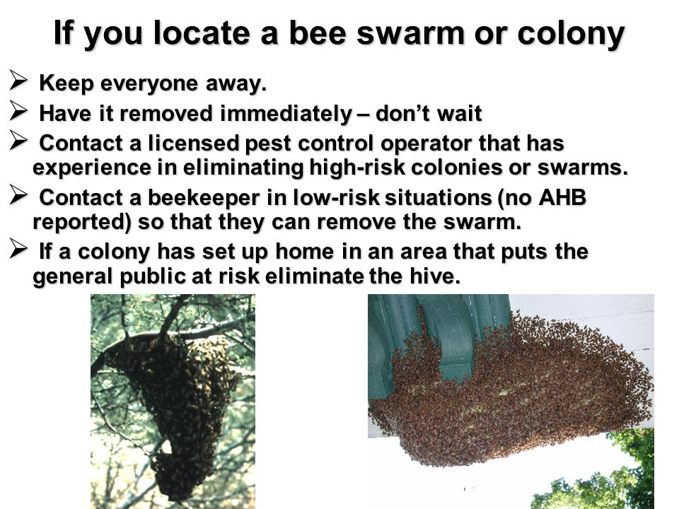 If you locate a bee swarm or colony Keep everyone away.