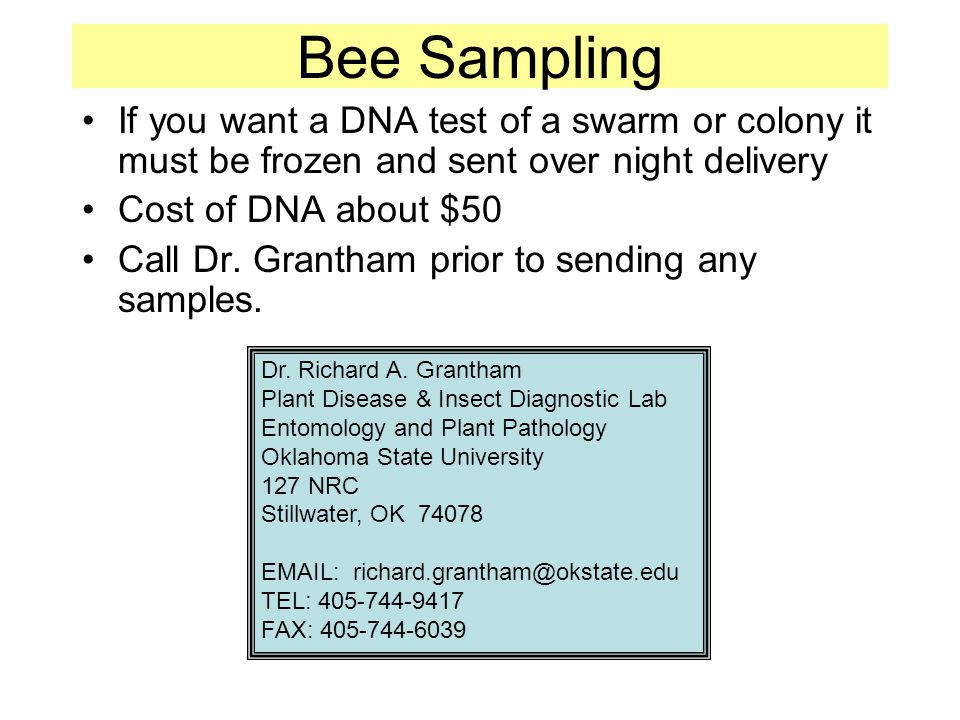 Bee Sampling If you want a DNA test of a swarm or colony it must be frozen and sent over night delivery Cost of DNA about $50 Call Dr.
