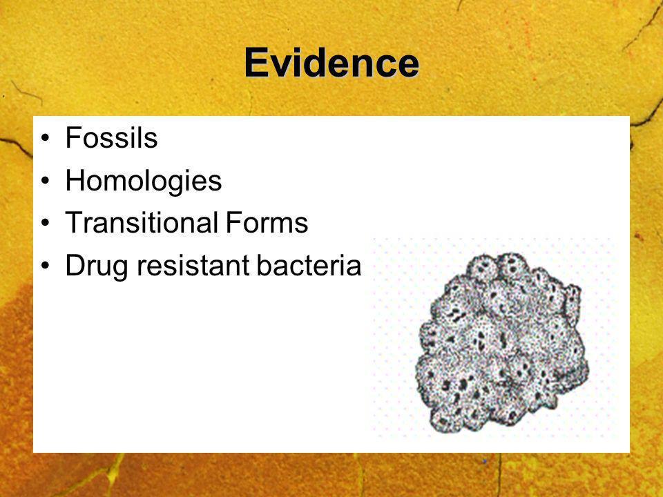 Evidence Fossils Homologies Transitional Forms Drug resistant bacteria