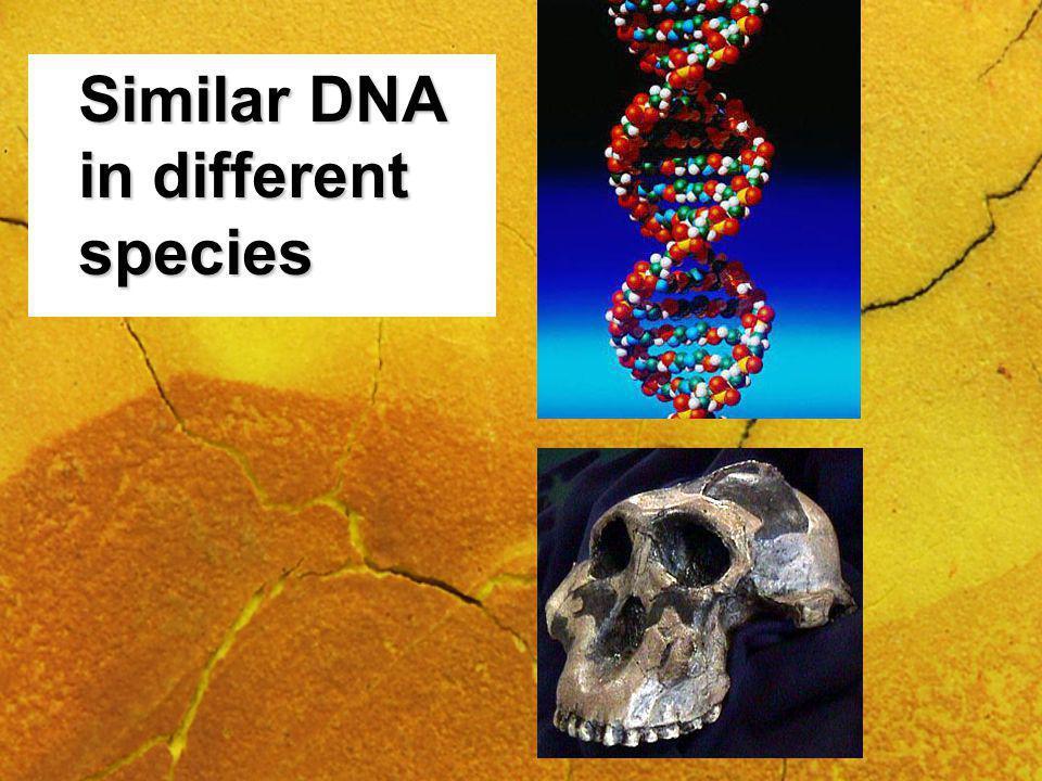 Similar DNA in different species