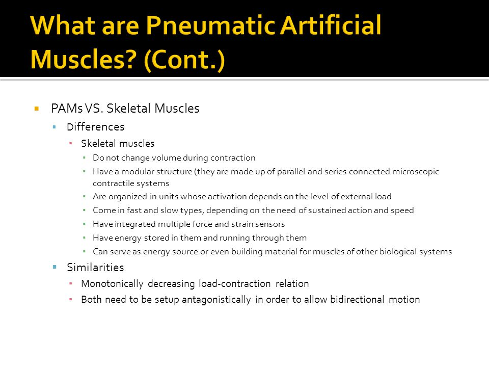 PAMs VS. Skeletal Muscles D ifferences Skeletal muscles Do not change volume during contraction Have a modular structure (they are made up of parallel