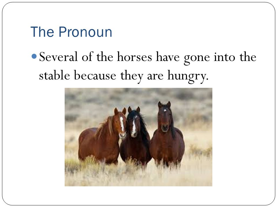 The Pronoun Several of the horses have gone into the stable because they are hungry.