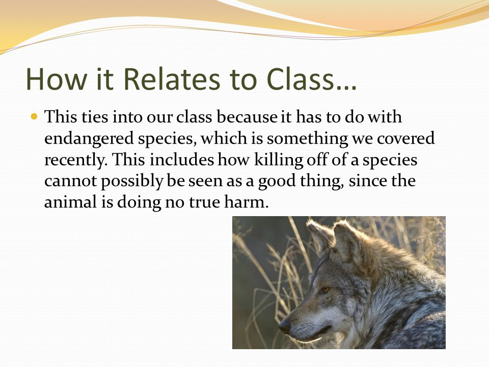 How it Relates to Class… This ties into our class because it has to do with endangered species, which is something we covered recently.