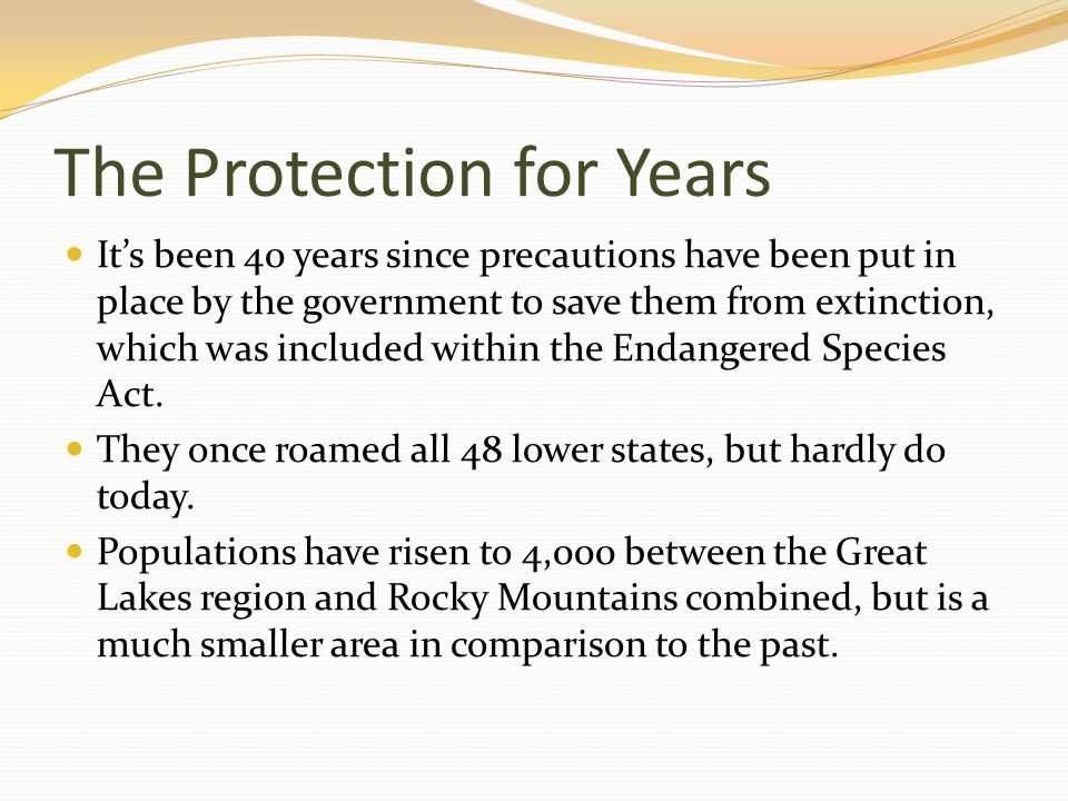 The Protection for Years Its been 40 years since precautions have been put in place by the government to save them from extinction, which was included within the Endangered Species Act.