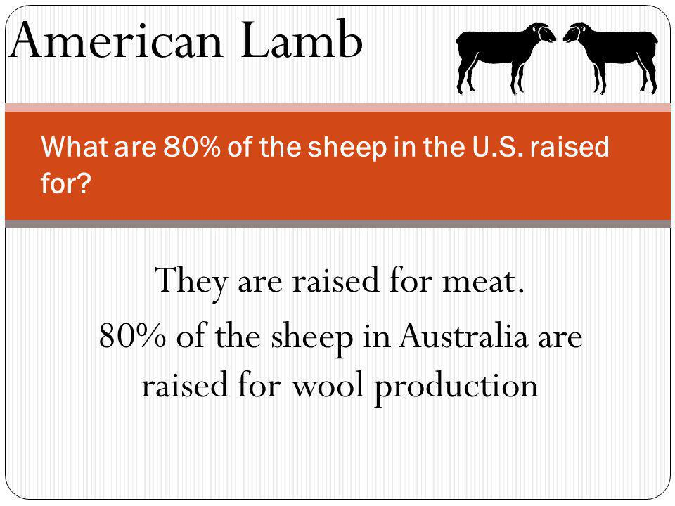 American Lamb What are 80% of the sheep in the U.S. raised for? They are raised for meat. 80% of the sheep in Australia are raised for wool production